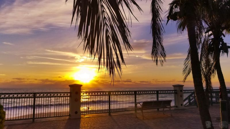 Good morning... 🌞 EyeEm Nature Lover EyeEm Best Shots EyeEmNewHere Morning Sunrise Florida Tree Sea Sunset Water Beach Sun Sky Horizon Over Water Silhouette Romantic Sky Tranquil Scene Dramatic Sky Tranquility