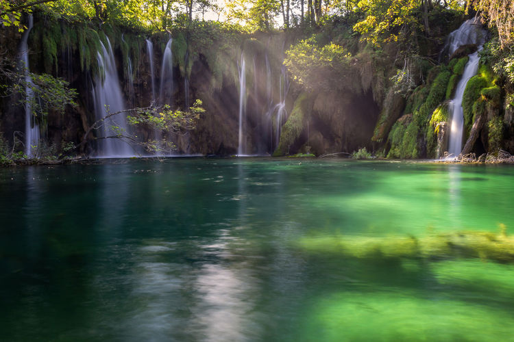 Water Tree Beauty In Nature Scenics - Nature Plant Tranquility Nature Waterfront No People Motion Tranquil Scene Waterfall Long Exposure Lake Forest Day Green Color Flowing Water Power In Nature Outdoors Flowing Falling Water Plitvice National Park Zen Plitvice Lakes National Park