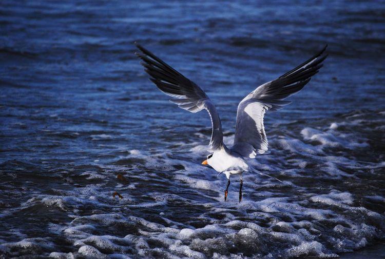 Seagull flying over foamy ocean waves