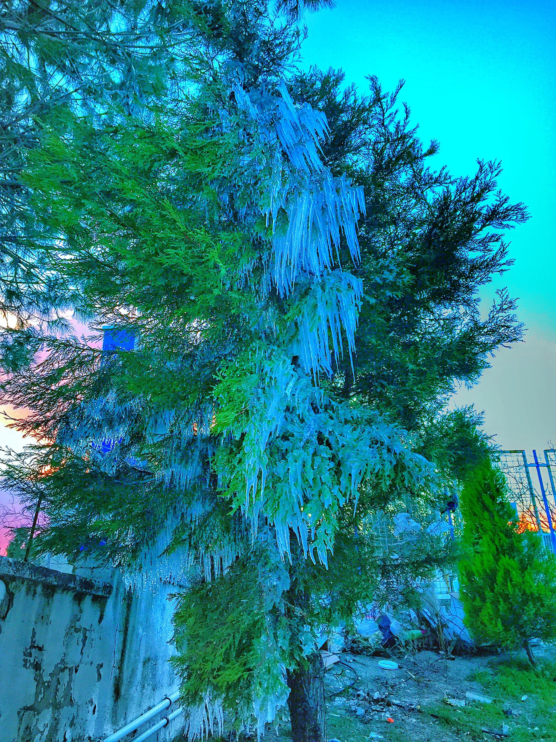 tree, low angle view, clear sky, branch, growth, blue, sunlight, nature, beauty in nature, day, tranquility, outdoors, built structure, no people, sunny, sky, scenics, green color, tree trunk, architecture