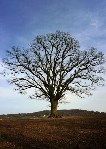 Let England Shake Oak Winter Wood Wye Valley