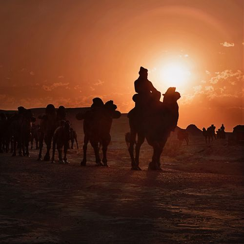 The road to glory - XinJiang China Sunset Silhouette Domestic Animals Mammal Sky Sun Livestock Riding Outdoors Desert Full Length Beauty In Nature Nature Transportation Travel Destinations Travel China Silk Road Trade EyeEmNewHere The Week On EyeEm