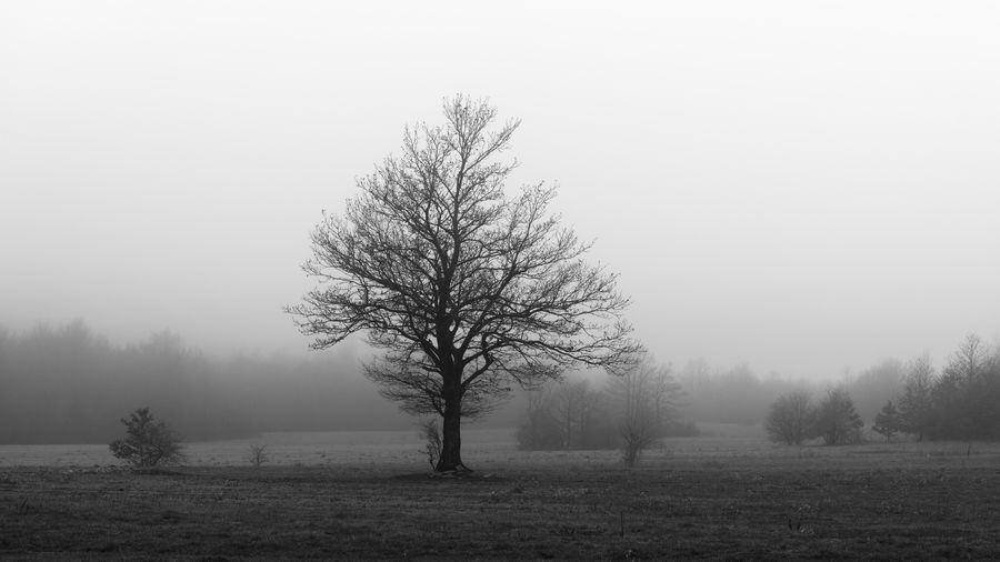 Bare tree on field against sky during foggy weather
