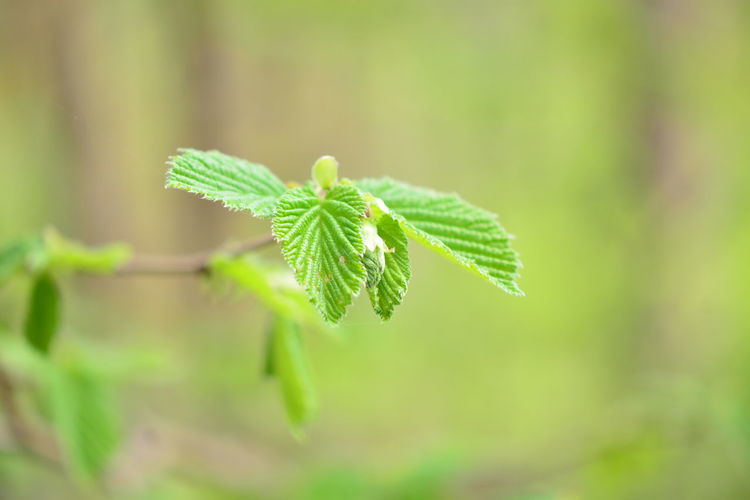 Green Color Plant Close-up Leaf Beauty In Nature Plant Part Growth Focus On Foreground No People Nature Day Outdoors Selective Focus Botany Fragility Vulnerability  Land Beginnings Field Freshness Herb