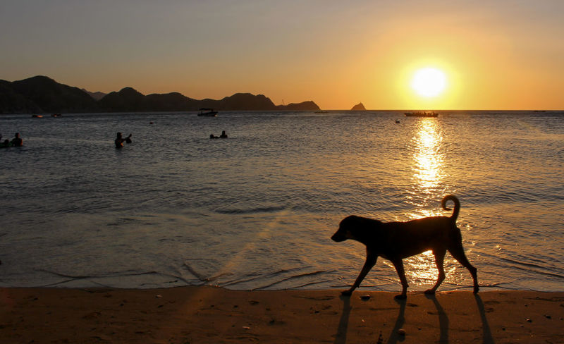 """""""Dog silhoutte in Taganga Sunset"""" Taganga is a beach in Colombia. Animal Animal Themes Beach Colors Dog Light Behind Clouds Nature Pets Sea Silhouette Sunlight Sunset Taganga Colombia Travel Destinations Water"""