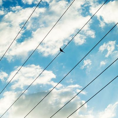 Bird on a wire 🐦 Line and Form DaleTidyPhoto LineAndForm Nicaragua Leon Bird Simple StreetPhotography TravelPhotography