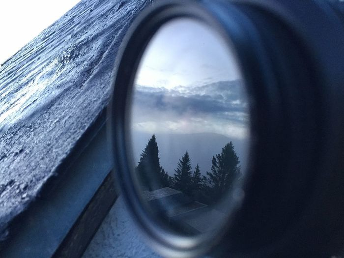 Reflection of trees on glass window
