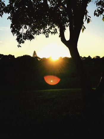 🌅 Soaking Up The Sun Enjoying The Sun Sunset Sunlight