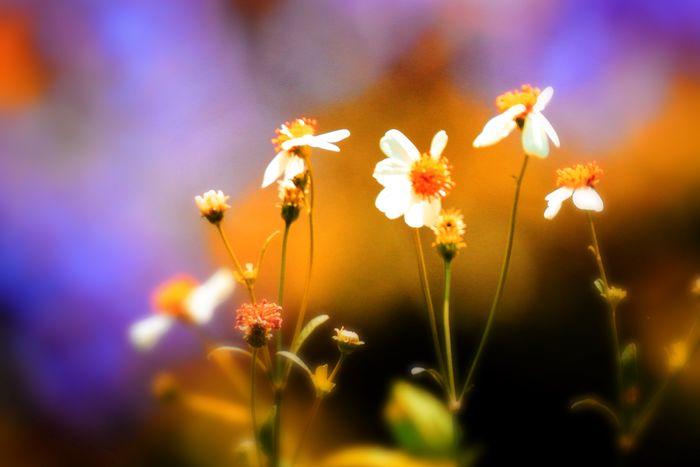Flowering Plant Flower Freshness Plant Vulnerability  Growth Fragility