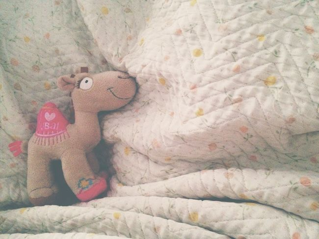Sundays lazy mornings Morning Lazy Camel Dubai