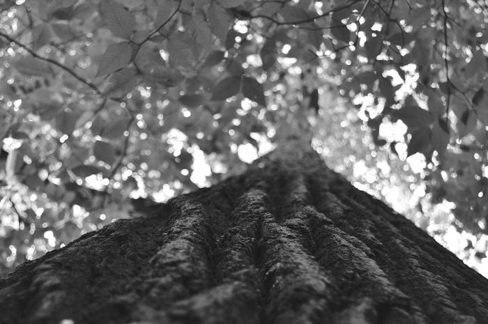 Nature On Your Doorstep Lookingup Hopkins Pond Haddonfield New Jersey Blackandwhite Nature The Great Outdoors - 2015 EyeEm Awards Nikon D3200 Macro Beauty