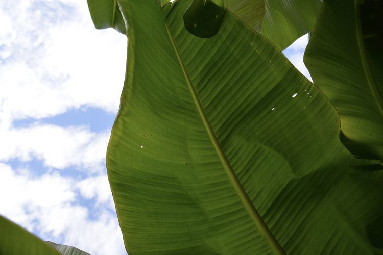 Low angle view of leaves on plant against sky