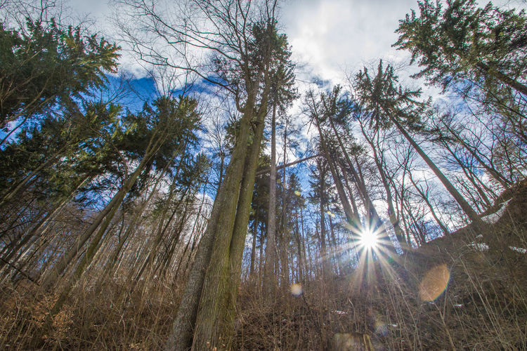 Sun in the middle of the tree Beauty In Nature Forest Low Angle View Nature Plant Sky Sunbeam Tree