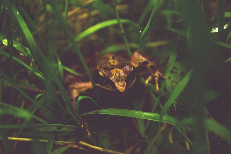 Showcase March Nature Perspective Nature Photography Nature_collection Frog Frogs Animals Grass Green Forest Life Watching Water Travel Photography Animal