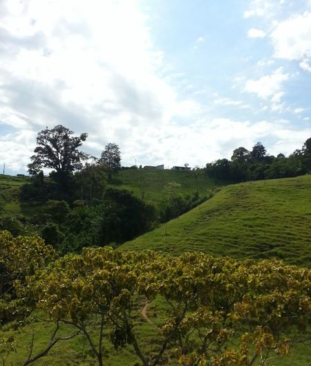 Colombia Es Bella Streamzoofamily Eyem Nature Lover Things That Are Green