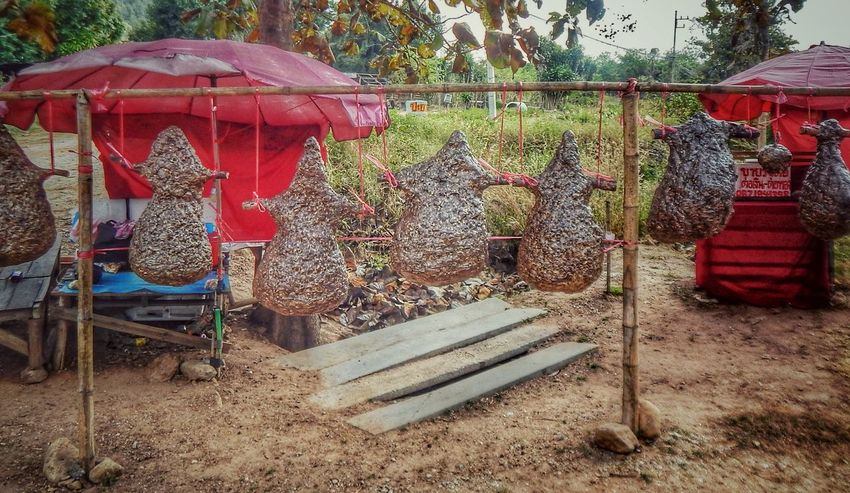 Wasp Wasp Nest For Sale Roadside Unusual Deserted Empty Places Large Group Of Objects Hanging Around Hidden Places Issan Thailand