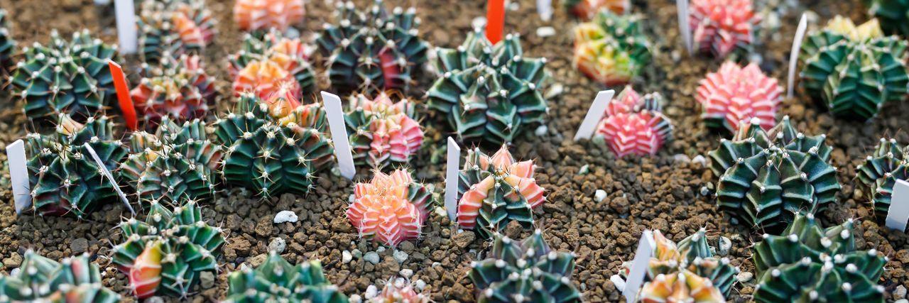 Full frame shot of multi colored cactus