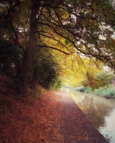Tree No People Yellow Nature Close-up Day Water Outdoors Canal Path Canal Freshness Green Color Non-urban Scene Countryside Autumn Scenics Beauty In Nature Leaves Fall Fall Beauty Fall Colors