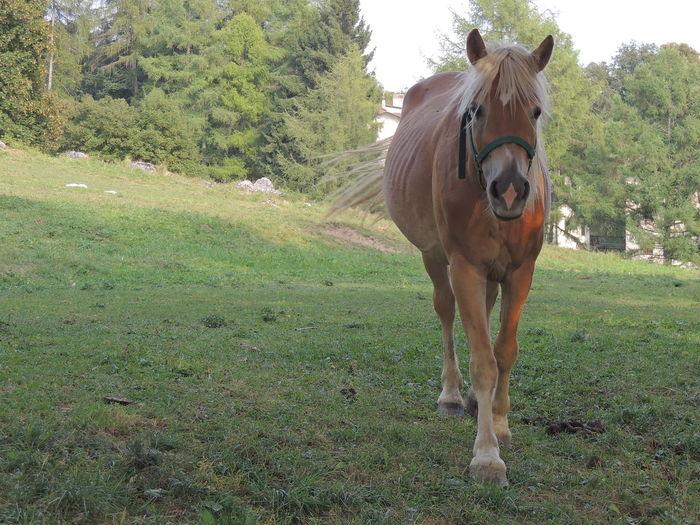 Portrait of horse on grassy field