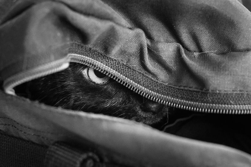 Close-up of cat in backpack