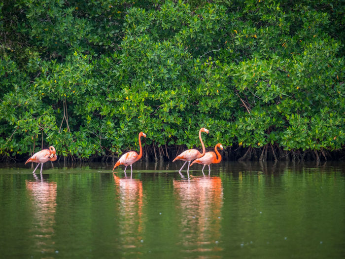 Animal Family Animal Themes Animals In The Wild Beauty In Nature Bird Duck Flamingo Lake Medium Group Of Animals Nature Reflection Swan Swimming Togetherness Tree Water Water Bird Waterfront Wildlife