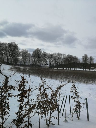 A Winters picture! Tree Agriculture Lake Reflection Sky Cloud - Sky Farmland Cultivated Land Agricultural Field Plantation Countryside