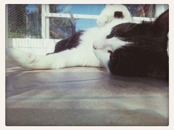 5pm Cat Yoga