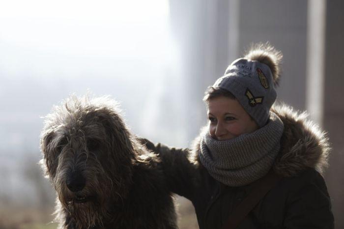 ❤️ ❤️ ❤️ photo by AllahobbWomen Cold Temperature Smiling Domestic Animals Dog Life Dog Days Portrait Willi The Wolfhound Irish Wolfhound Dog Photography. Bonding Dogs of EyeEm irishwolfhoundTogerherness Love❤