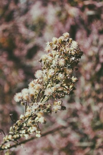 Animal Themes Beauty In Nature Blossom Close-up Day Flower Flower Head Fragility Freshness Growth Insect Nature No People Outdoors Pollination Springtime Tree The Week On EyeEm