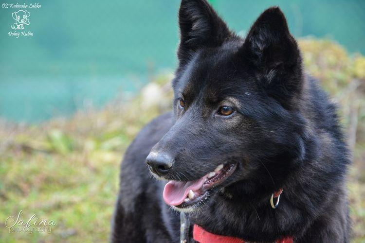Roxy from the shelter :) Beautiful Shelter Photography Cute Photo Dog Walking Animal Dog Doglover Black
