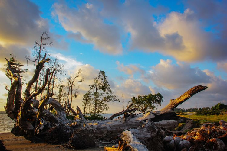 Panoramic view of driftwood on land against sky