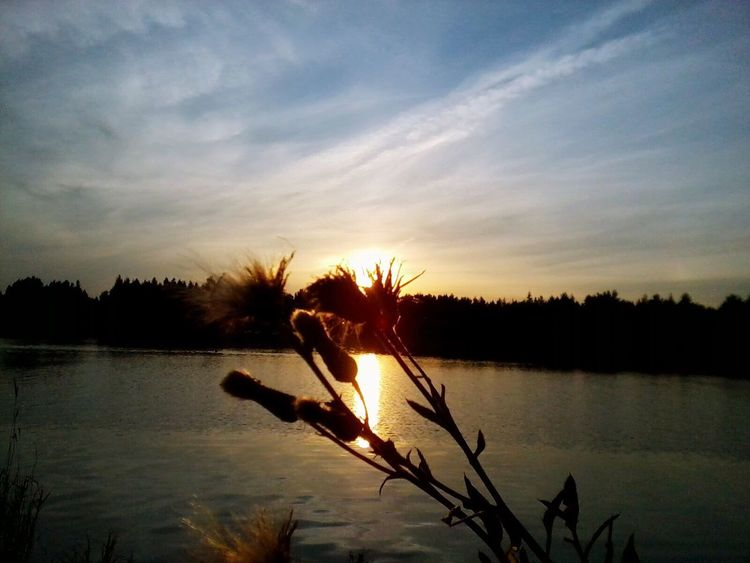 Sunset Nature Silhouette Growth Beauty In Nature Sky Plant No People Water Tranquility Outdoors Tree
