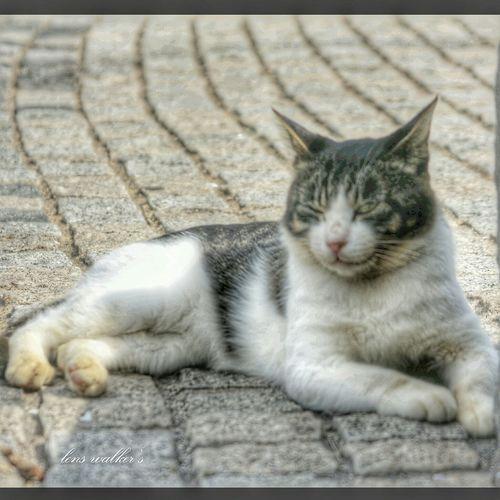 ウインク😉 キジシロ のらねこ部 ファインダー越しの私の世界 ファインダーは私のキャンパス 自由猫 Cat♡ Cat Stray Cat Playing With The Animals Cats Of EyeEm EyeEm Best Shots