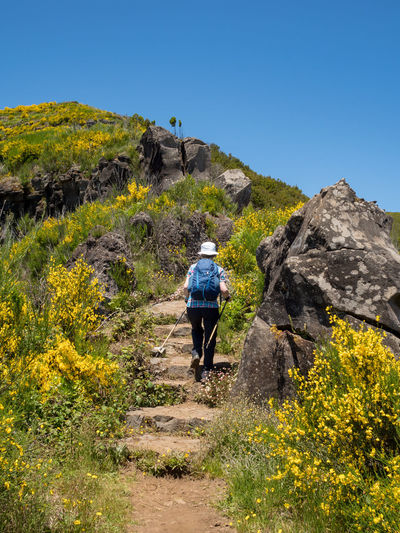 Rear view of hiker walking on mountain against clear blue sky