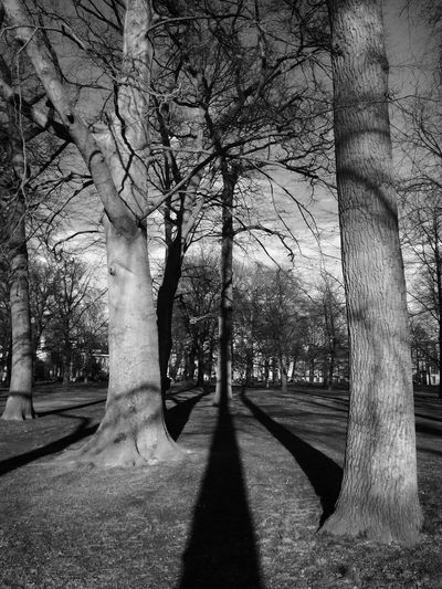 Blackandwhite Photography Trees Shadows Park Urban Landscape Haarlem Netherlands