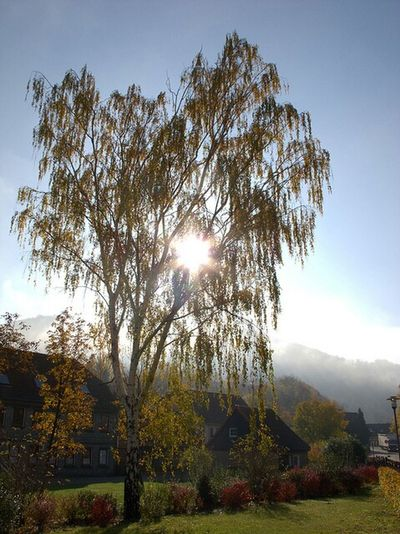 Herbst Autumn