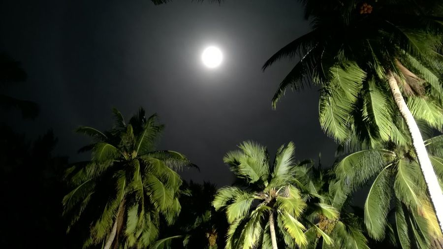 A peaceful night with a full moon.. Takingphotos A Place Somewhere In Gan Island My Maldives Nature Nightphotography Sky Tree Night Lights Outdoors Check This Out Full Moon Night  Fullmoon Palm Trees