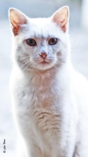 Animal Animals🐾 Cat Photography Cats 🐱