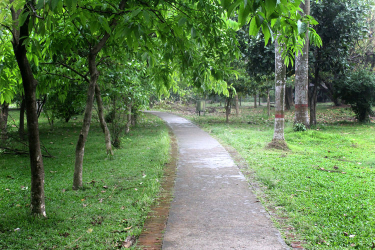 Plant Tree Footpath The Way Forward Green Color Nature Direction Day No People Park Growth Grass Tranquility Outdoors Tranquil Scene Beauty In Nature Land Garden Path Leaf Treelined Lush Foliage Foliage