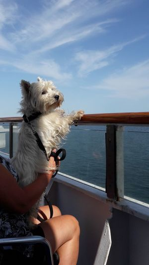 Dog on boat in sea against sky