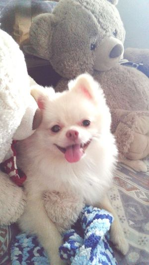 Ponto Smile Pets Dog Cute Domestic Animals Animal Themes Animal Love PETbaby DogLove Cute Pets