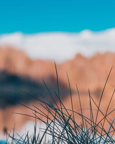 Plant Growth No People Tranquil Scene Focus On Foreground Cloud - Sky Grass Landscape Close-up Non-urban Scene Outdoors EyeEmNewHere