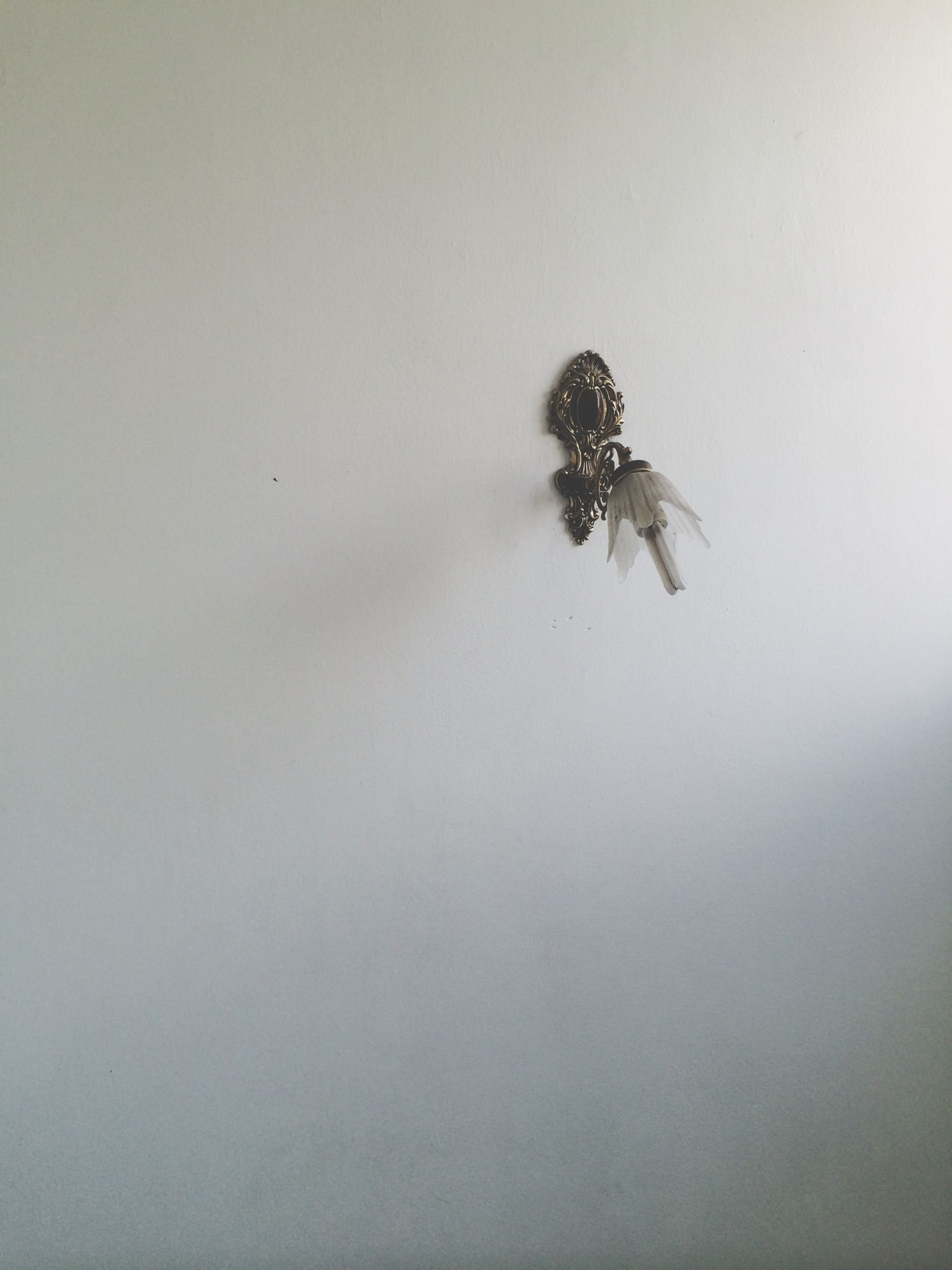 insect, indoors, copy space, wall - building feature, animal themes, one animal, animals in the wild, white background, wildlife, spider, studio shot, close-up, no people, wall, white color, nature, day, built structure, high angle view