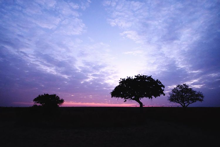 Tree Silhouette Sky Sunset Beauty In Nature Tranquility Nature Tranquil Scene Scenics No People Landscape Outdoors Sunset_collection Africa Safari Kenya Massai Marra Beauty In Nature Sunrise And Clouds