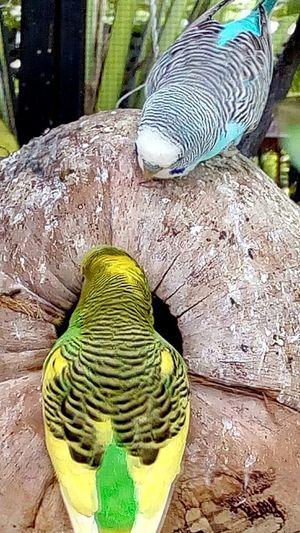 Bird In The Zoo Bird