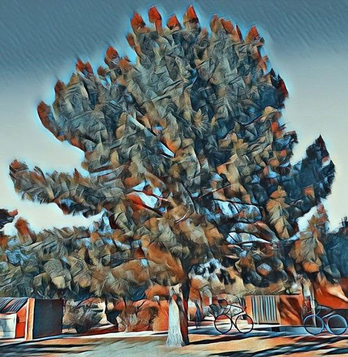 Tree at thunderbird, Arizona No People Flying Day Outdoors Nature Sky First Eyeem Photo