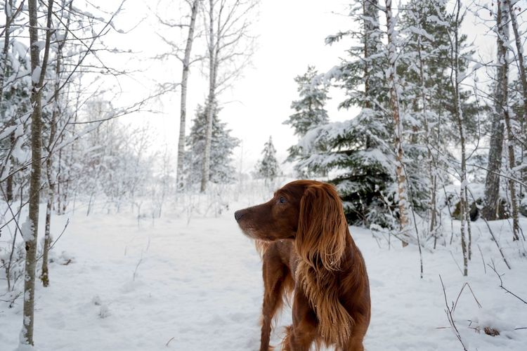 Dog Outdoors In Winter