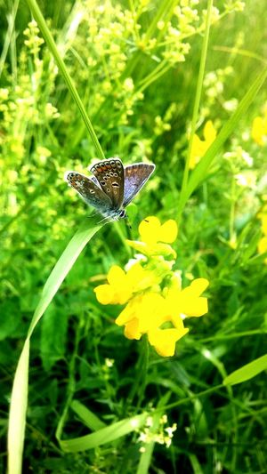 Taking Photos Butterfly Hello World Check This Out Nature Photography Summer 🌾🌻🌱
