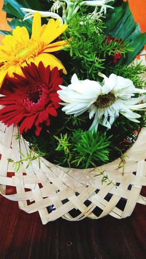 High angle view of white flowering plant in basket on table