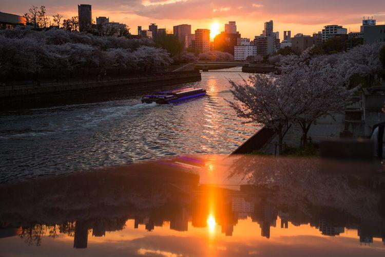 桜夕景 OSAKA Japan Photography Japan Cherry Blossom Springtime Cherry Tree City Cityscape Urban Skyline Water Tree Sunset Skyscraper Illuminated Modern Sunlight River Sunbeam